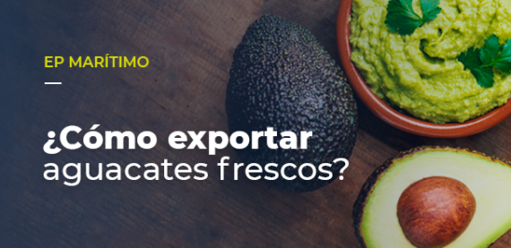 Cómo exportar aguacates frescos?